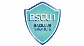 Bacillus subtilis CU1 + Zn